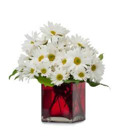 A daisy a day!