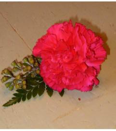 Pink Blush Groomsmen Boutonniere