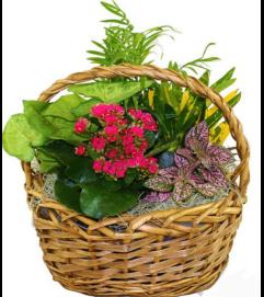 Garden Blooms Basket