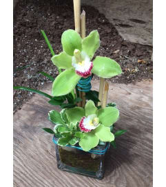 Admin Week Special - Oriental Orchids