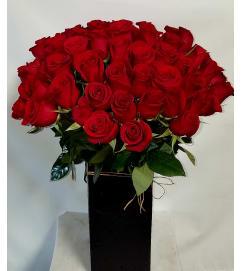 True Red Roses