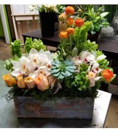 Spring Orchid Garden