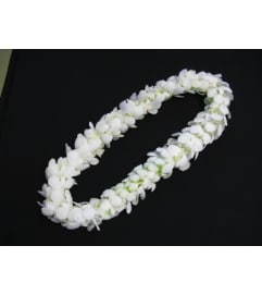 Pick Up Only Please Call to Place Order - White (Double Orchid)