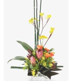 Mink Protea