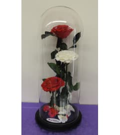 ENCHANTED ROSE TRIO RED WHITE