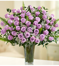 Long Stem Purple Roses