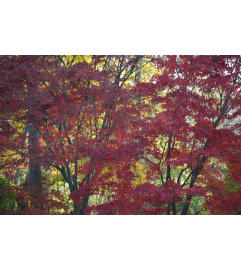 Red Tree Lovers Arrangement