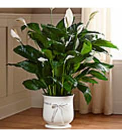The FTD® Comfort Planter