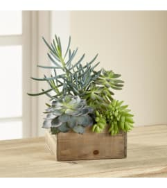 Succulents in a box 2