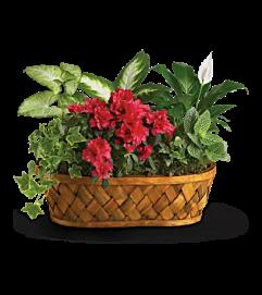 Plant Envy Garden Basket