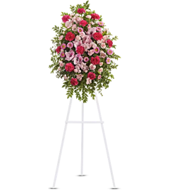Teleflora - Pink Tribute Spray
