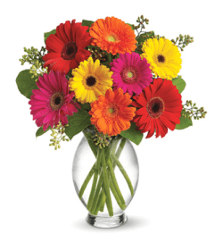SPECIAL! 30% OFF Teleflora's Gerbera Brights Bouquet
