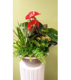 XL Anthurium Planter
