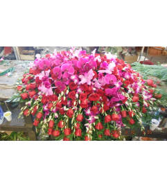 red roses, bombay orchids and philanopsis orchids casket spray