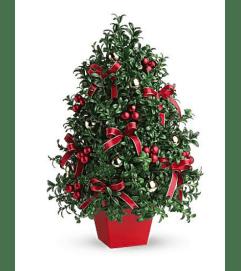 Boxwood Christmas Tree