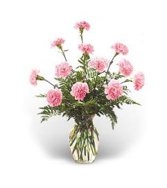 12 Pink Carnations Arranged