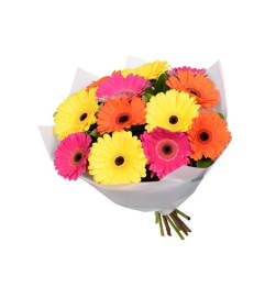 12 Wrapped Mini Gerbera Daisies