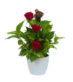 Green plant in ceramic with fresh roses