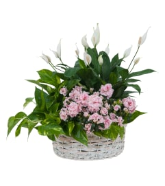 Living Blooming  White Garden Basket