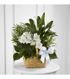 TROPICAL PLANT BASKET