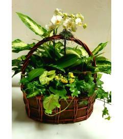 white Orchid Garden #3