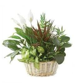 Basket Planter Garden