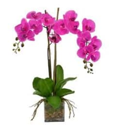 Purple Double Orchid