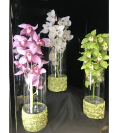 Elegant Cymbidium Orchards