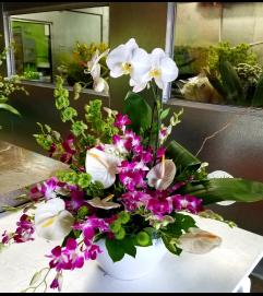 Comfort Orchid Garden #2