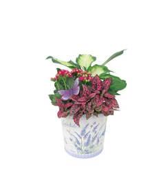 Lavender Planter Tin