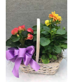 Assorted Blooming Plant Basket