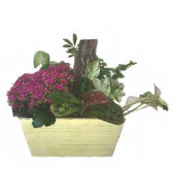 Tropic Planter