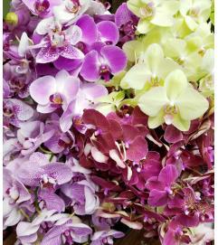 Fresh Cut Orchid Bouquet