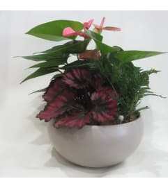 Tropical Delight Planter
