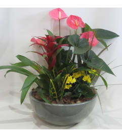Bromeliad and Tropical Planter