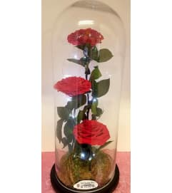 Preserved roses lamp in red