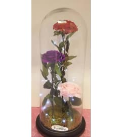 ENCHANTED ROSE  LAMP MIX COLOR ROSES