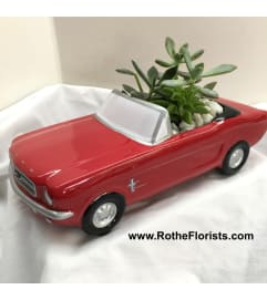 '65 Ford Mustang with Succulents