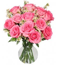 Chantilly Pink Roses