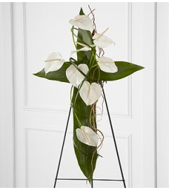 Anthurium Cross