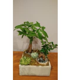 Money Tree/Succulent Garden