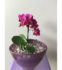 Purple mini orchid planter