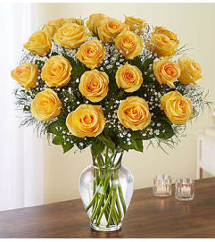 Yellow Roses Two Dozen