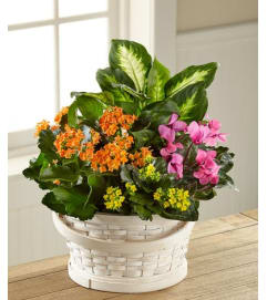 Color Crush Basket Dishgarden