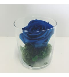 Perfectly Preserved Rose - Blue