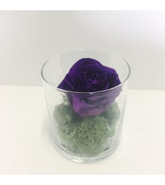 Perfectly Preserved Rose - Purple