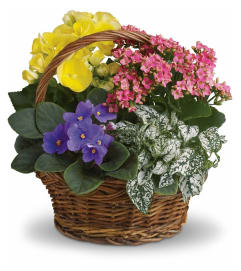 Mixed Blooming Basket