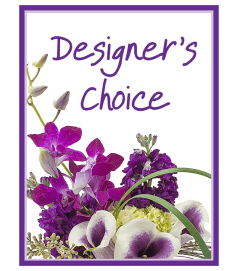 Our Designers Choice