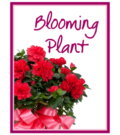 Our Blooming Plant Deal of the Day