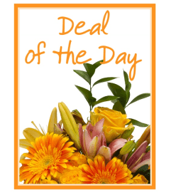 Our Deal of the Day